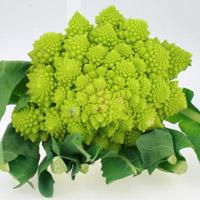 Romanesco grüne Blumenkohlart, das zarte Umblatt kann mit verzehrt werden